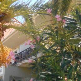 Skrze palmové listy prosvítá radostnější život