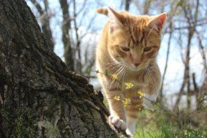 kočka u stromu v magické bajce