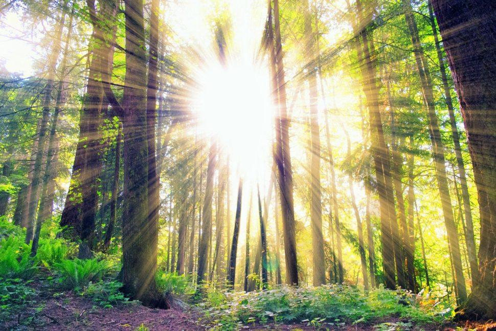Sluneční svit prochází mezi stromy