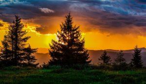 Stromy v západu slunce v magické bajce o Stromvěkovi