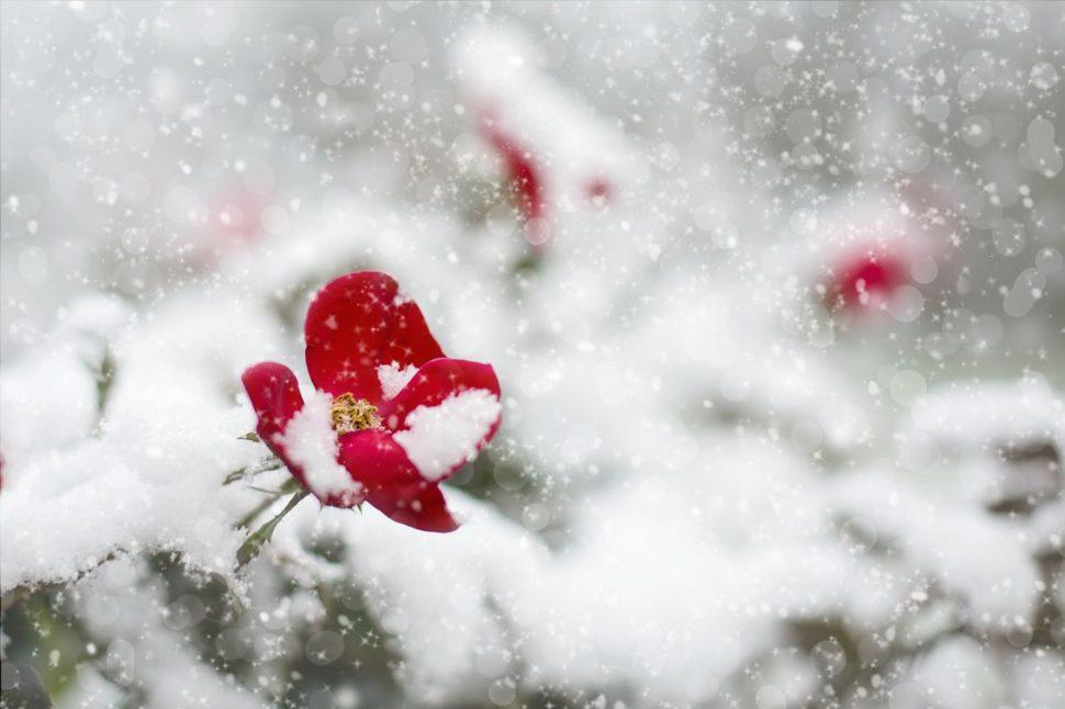 Jste pro hezké muže neviditelná jako růže pod sněhem?