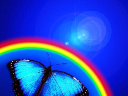 modrý motýl letí k duze